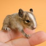 Three Types of Exotic Pets and How to Care for Them